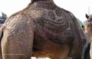 camel_haircut_design1