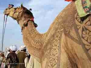 camel_haircut_design2