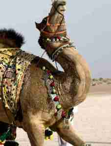 camel_haircut_design8