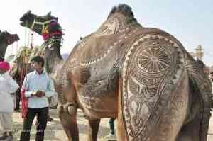 camel_haircut_design9